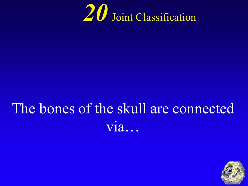 The bones of the skull are connected via…