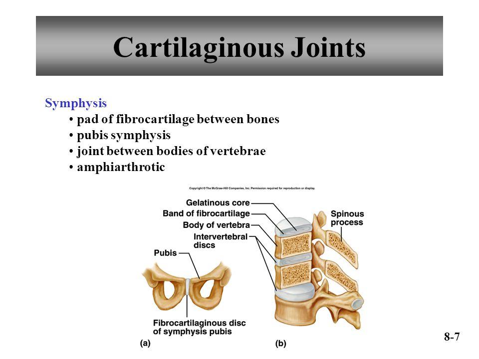 Cartilaginous Joints Symphysis pad of fibrocartilage between bones