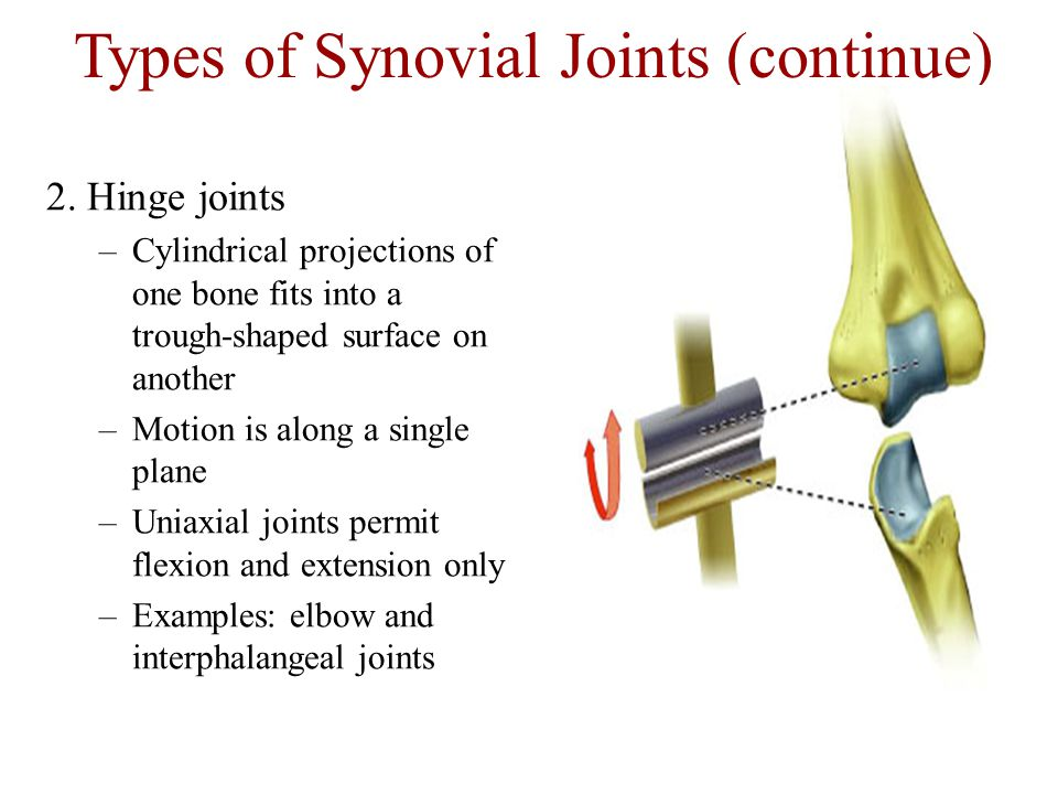 Types of Synovial Joints (continue)