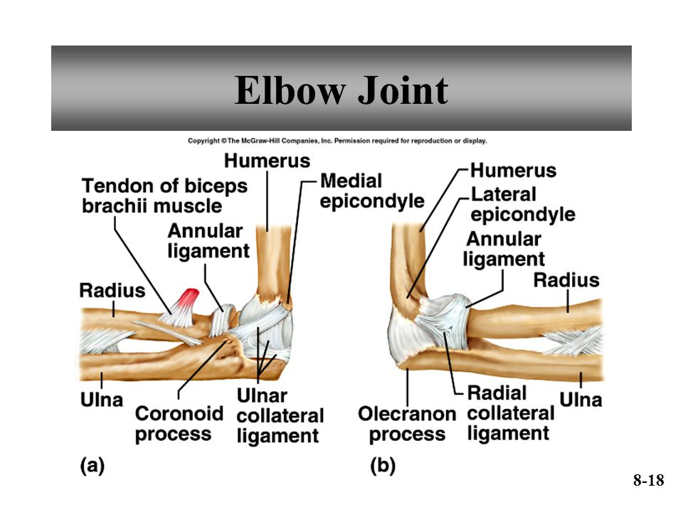 Elbow Joint 8-18