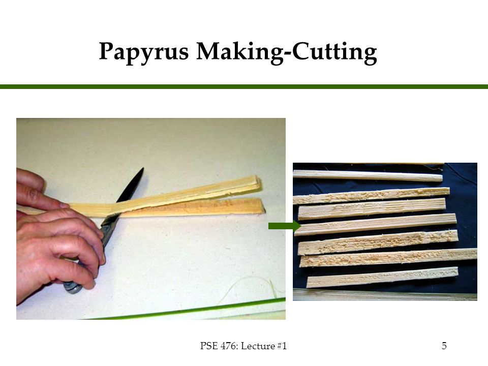 Papyrus Making-Cutting