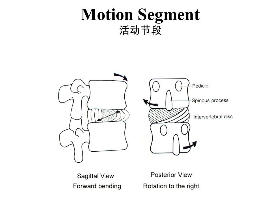 Motion Segment 活动节段