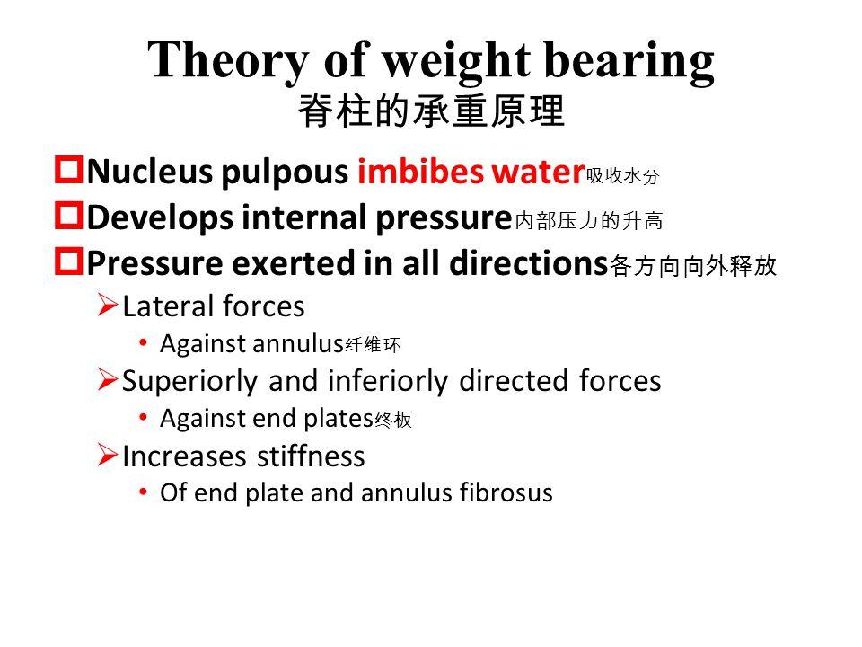 Theory of weight bearing 脊柱的承重原理