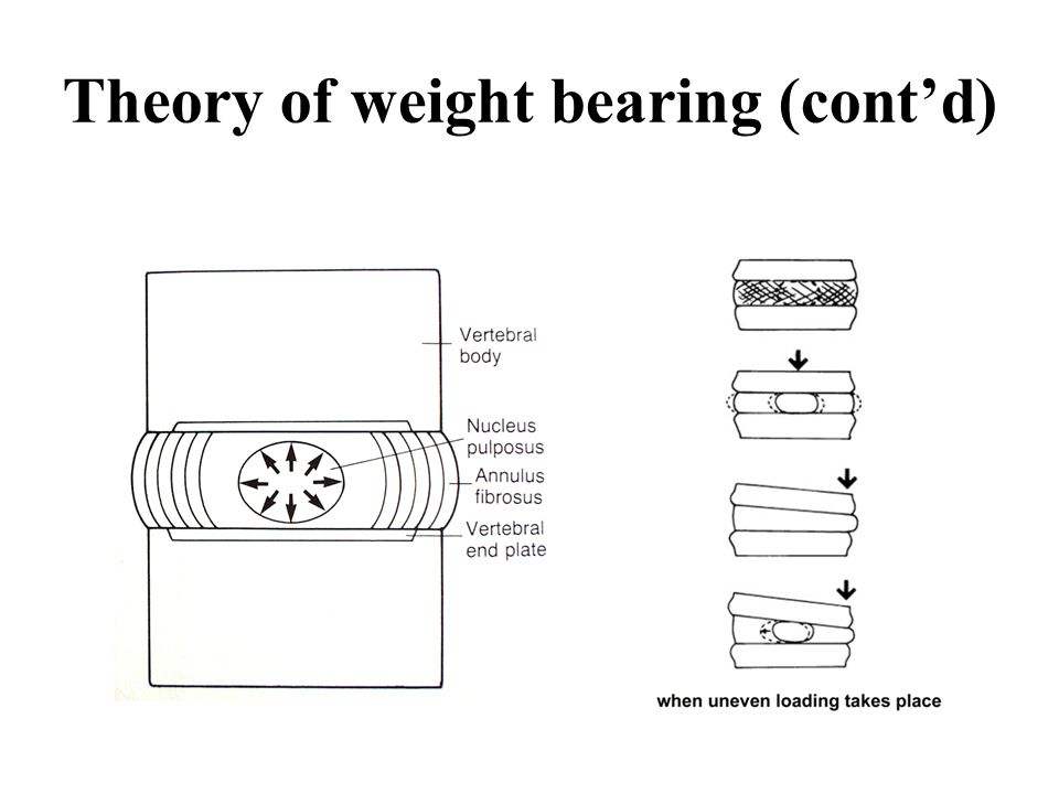 Theory of weight bearing (cont'd)