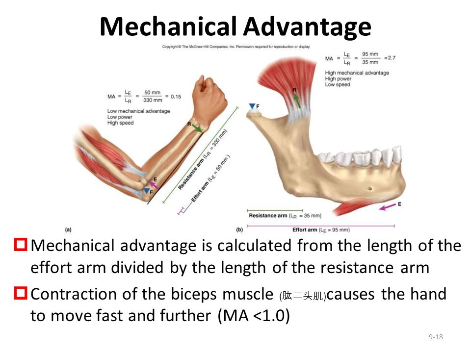 Mechanical Advantage Mechanical advantage is calculated from the length of the effort arm divided by the length of the resistance arm.