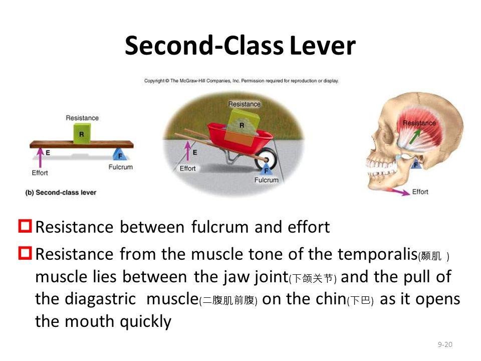 Second-Class Lever Resistance between fulcrum and effort