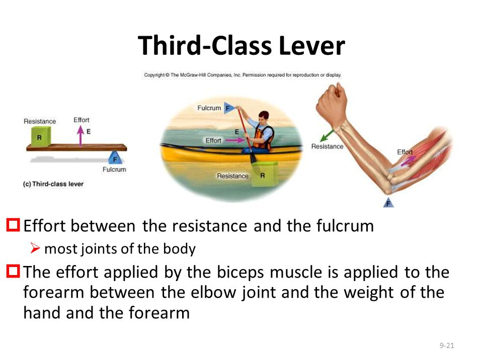 Third-Class Lever Effort between the resistance and the fulcrum
