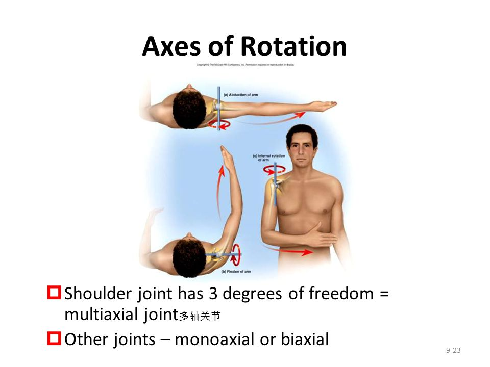 Axes of Rotation Shoulder joint has 3 degrees of freedom = multiaxial joint多轴关节. Other joints – monoaxial or biaxial.