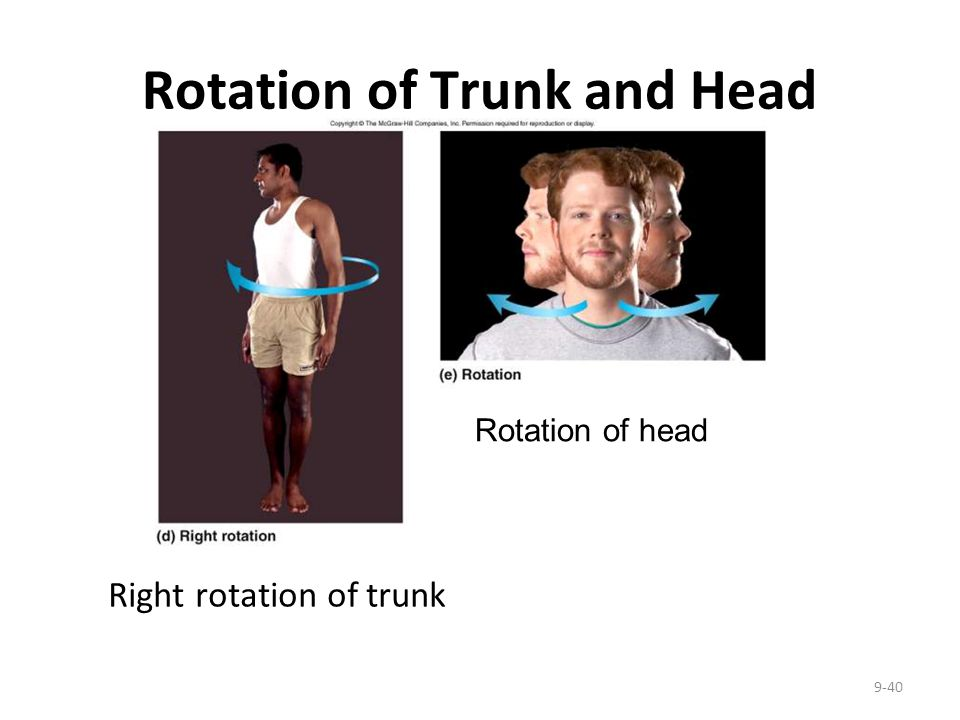 Rotation of Trunk and Head