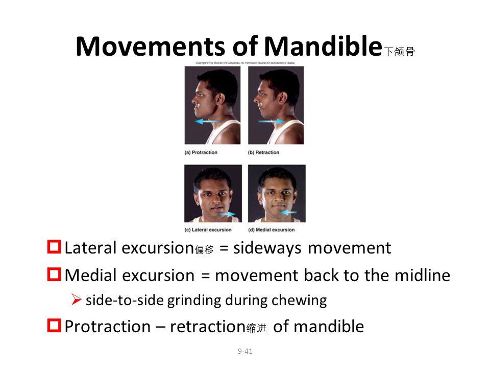 Movements of Mandible下颌骨