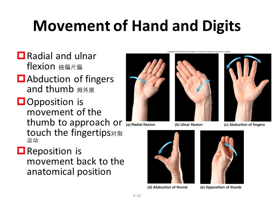 Movement of Hand and Digits