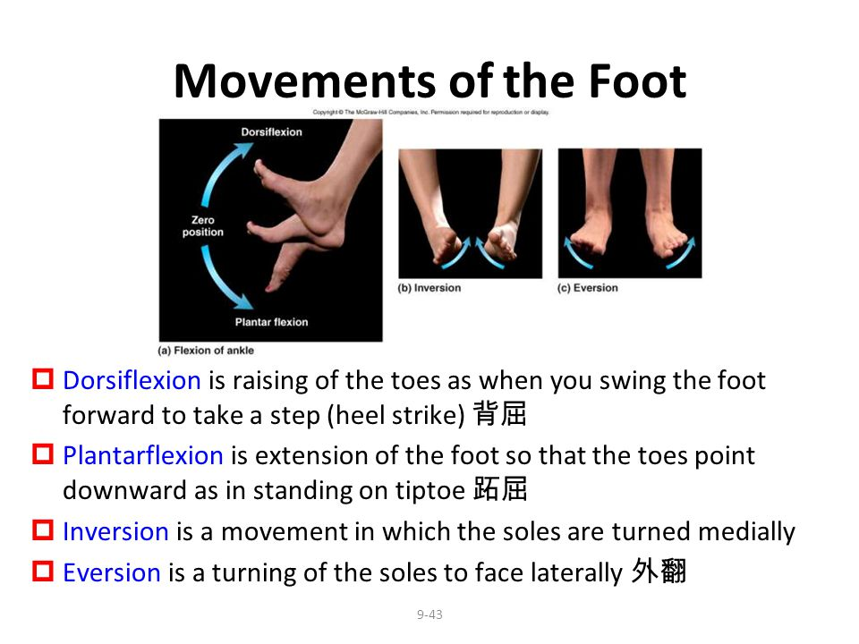 Movements of the Foot Dorsiflexion is raising of the toes as when you swing the foot forward to take a step (heel strike) 背屈.