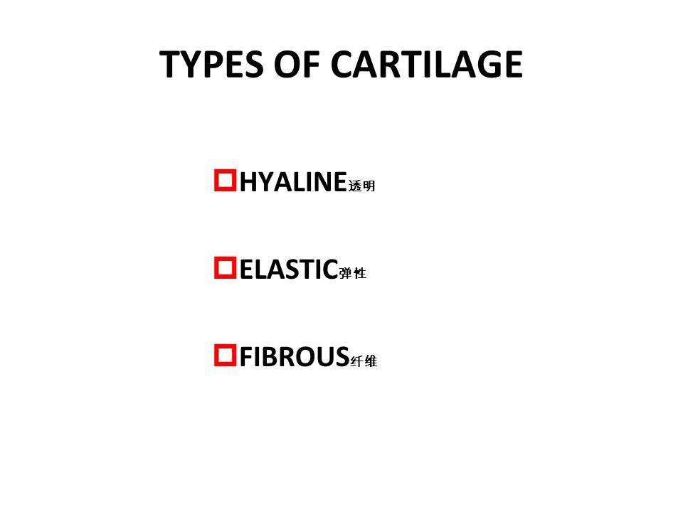 TYPES OF CARTILAGE HYALINE透明 ELASTIC弹性 FIBROUS纤维