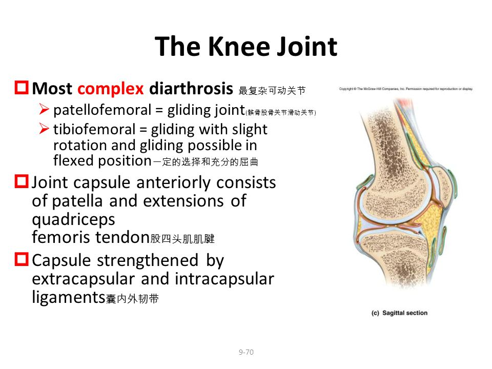 The Knee Joint Most complex diarthrosis 最复杂可动关节