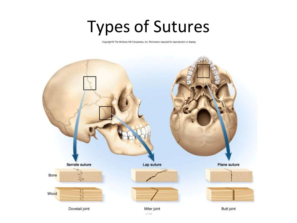Types of Sutures 9-8