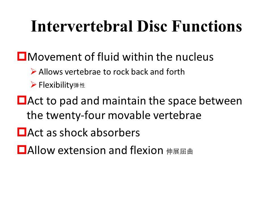 Intervertebral Disc Functions