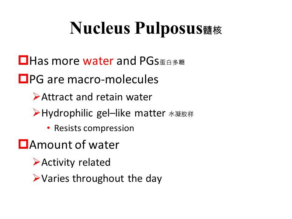 Nucleus Pulposus髓核 Has more water and PGs蛋白多糖 PG are macro-molecules