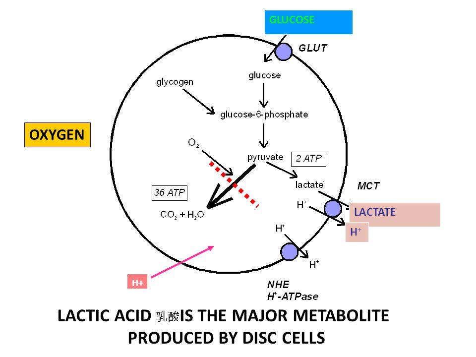 LACTIC ACID 乳酸IS THE MAJOR METABOLITE
