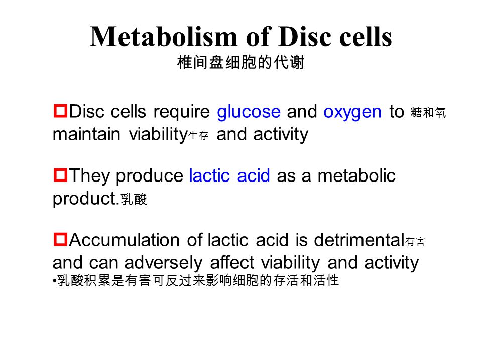Metabolism of Disc cells