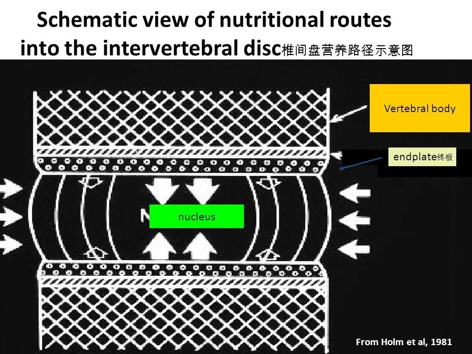 Schematic view of nutritional routes