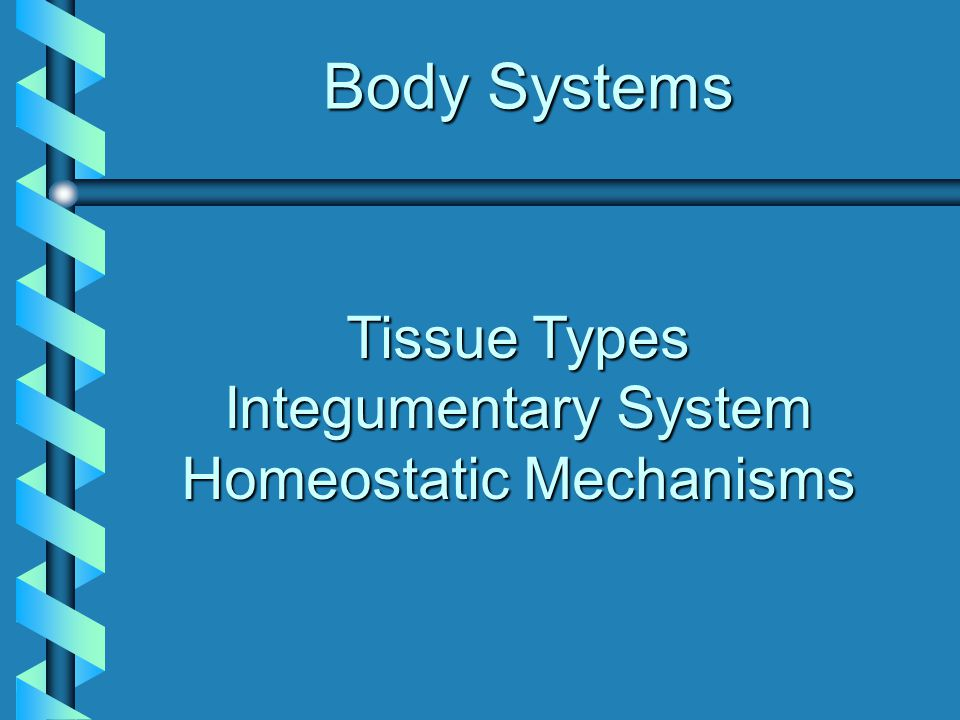 Tissue Types Integumentary System Homeostatic Mechanisms