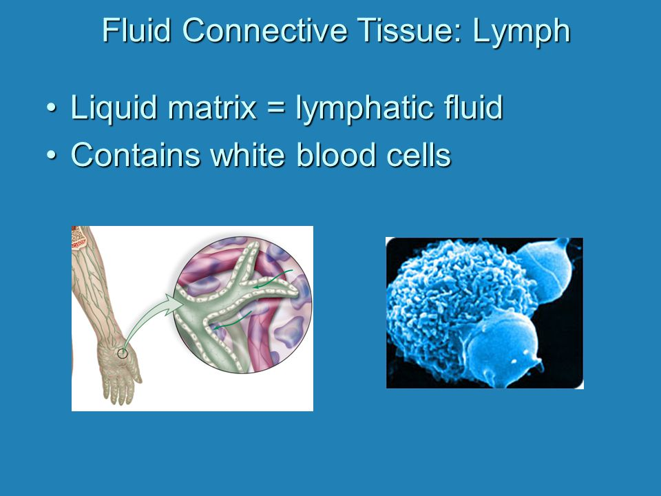 Fluid Connective Tissue: Lymph