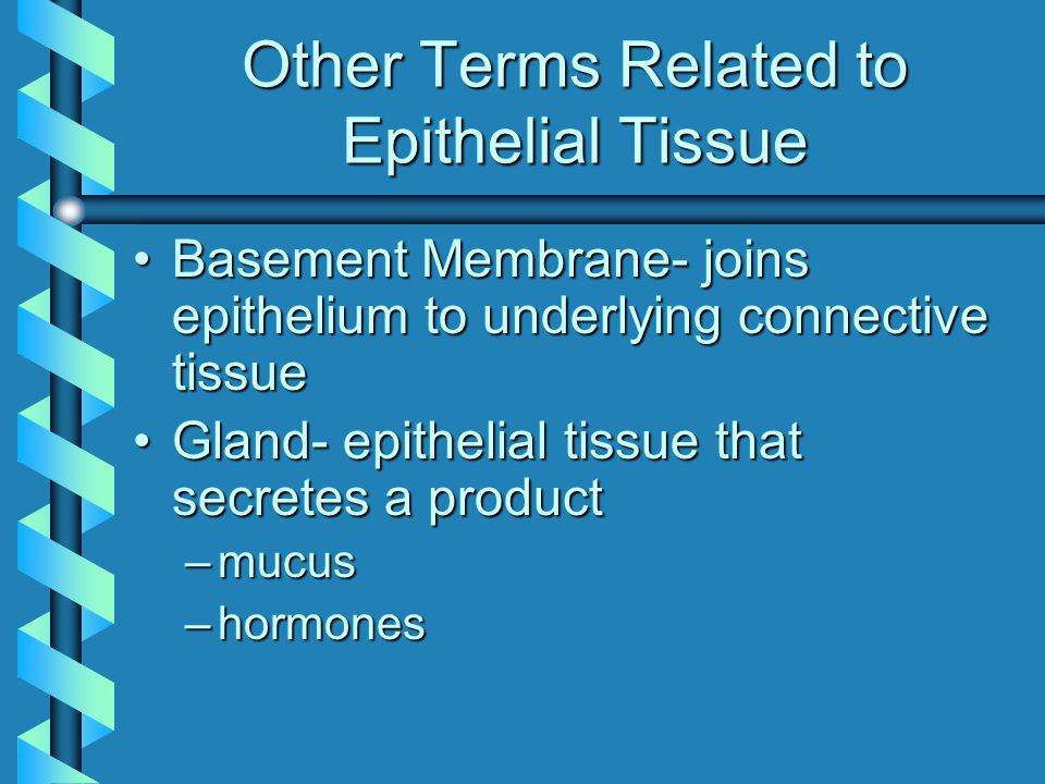 Other Terms Related to Epithelial Tissue