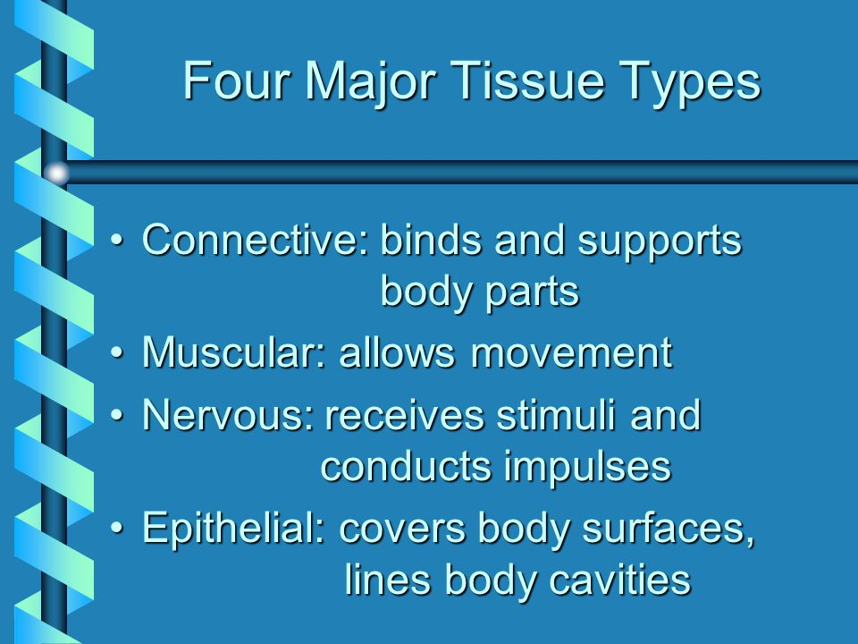 Four Major Tissue Types