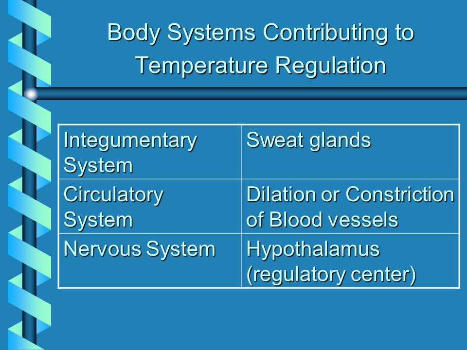 Body Systems Contributing to Temperature Regulation