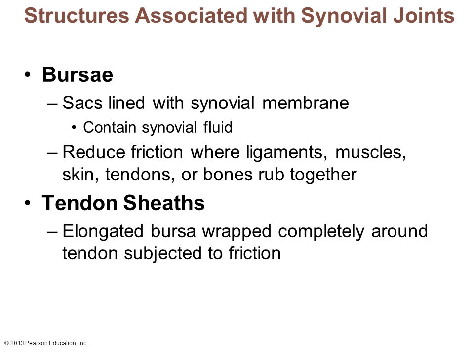Structures Associated with Synovial Joints
