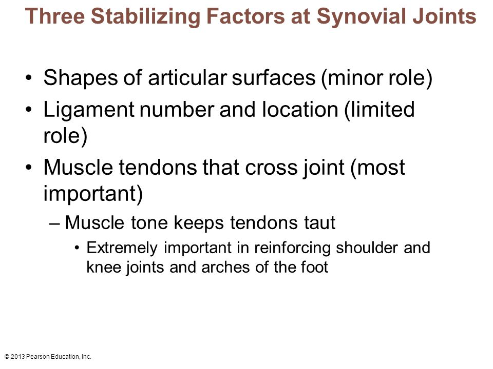 Three Stabilizing Factors at Synovial Joints