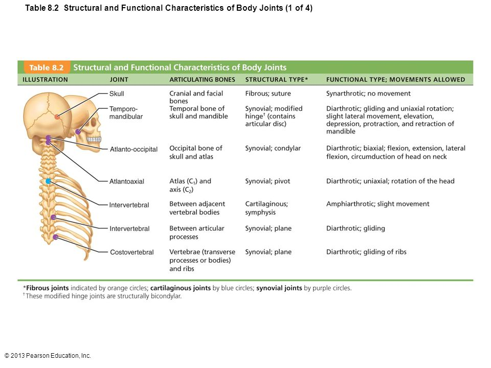 Table 8.2 Structural and Functional Characteristics of Body Joints (1 of 4)