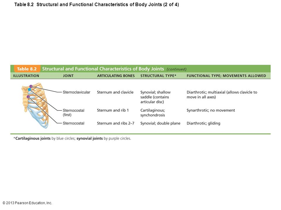 Table 8.2 Structural and Functional Characteristics of Body Joints (2 of 4)