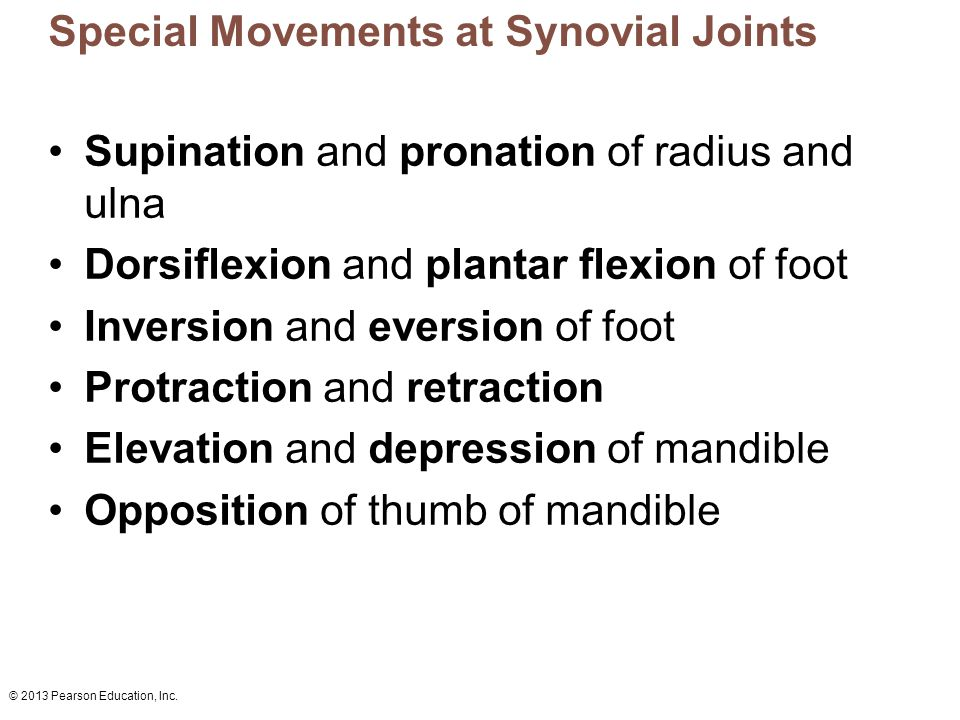 Special Movements at Synovial Joints