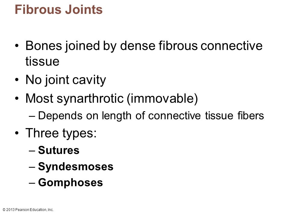 Bones joined by dense fibrous connective tissue No joint cavity