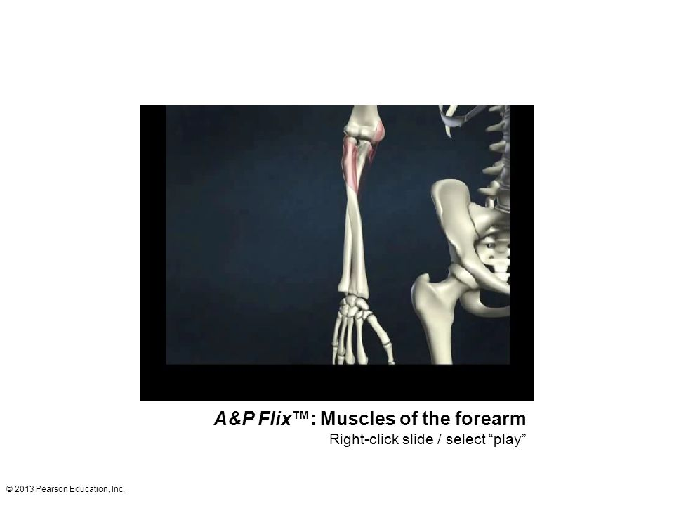 A&P Flix™: Muscles of the forearm