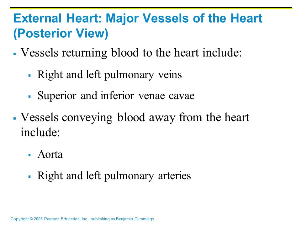 External Heart: Major Vessels of the Heart (Posterior View)