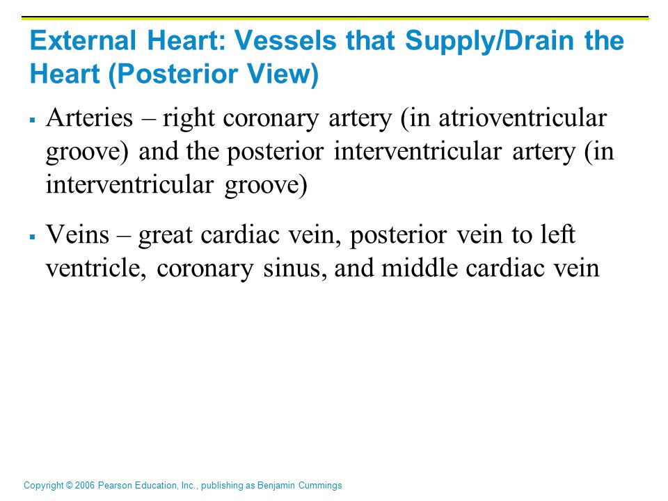 External Heart: Vessels that Supply/Drain the Heart (Posterior View)