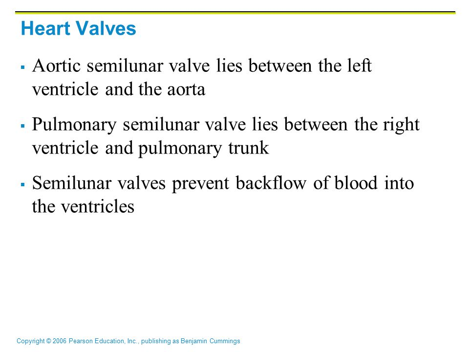 Heart Valves Aortic semilunar valve lies between the left ventricle and the aorta.