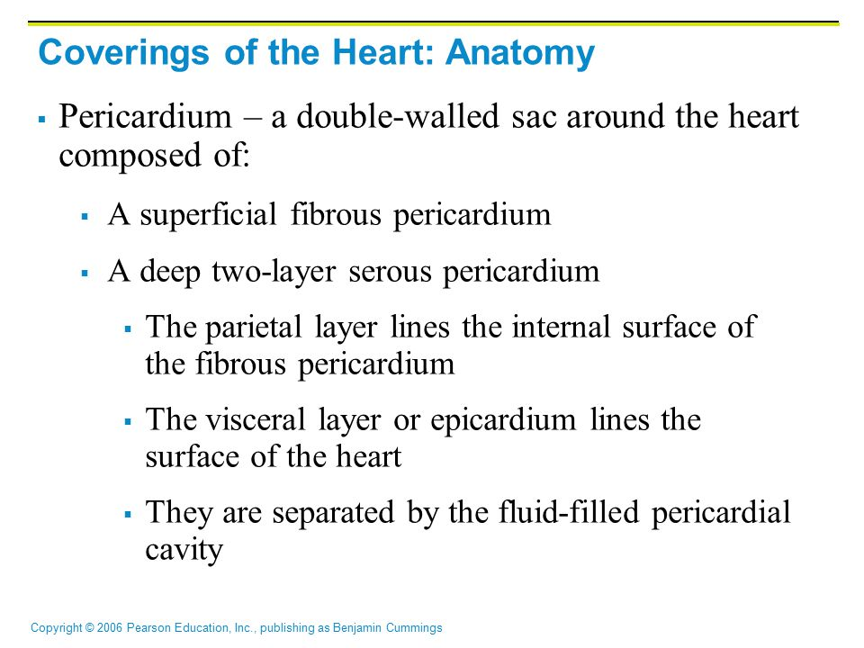 Coverings of the Heart: Anatomy