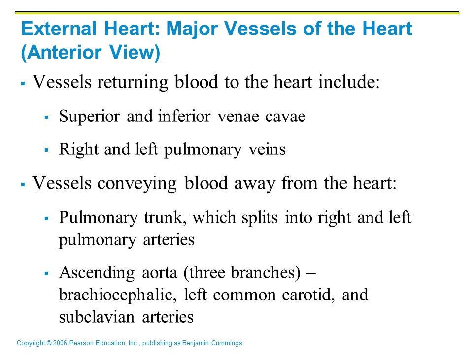External Heart: Major Vessels of the Heart (Anterior View)