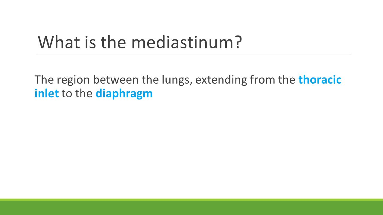 What is the mediastinum