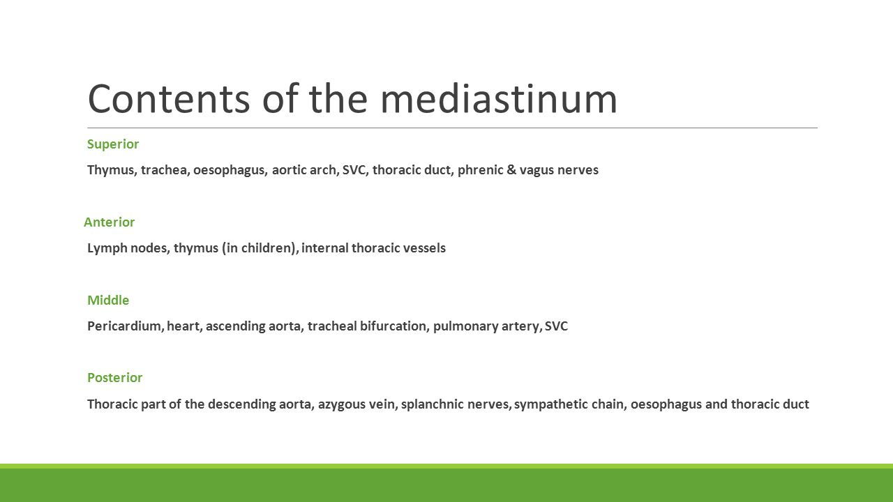 Contents of the mediastinum