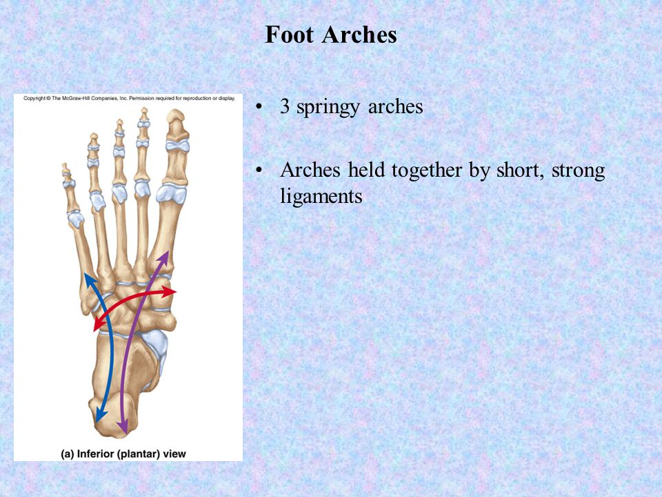 Foot Arches 3 springy arches