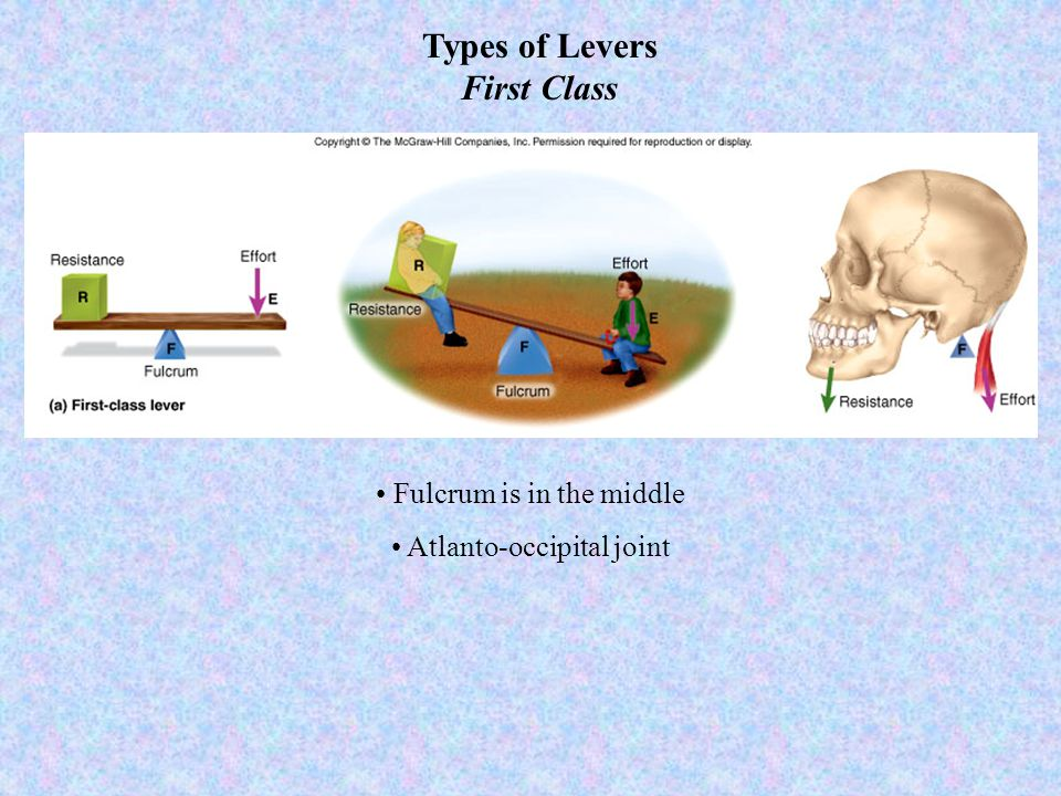 Types of Levers First Class