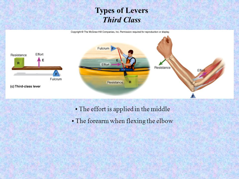 Types of Levers Third Class