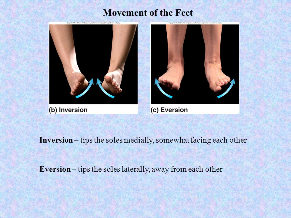 Movement of the Feet Inversion – tips the soles medially, somewhat facing each other.