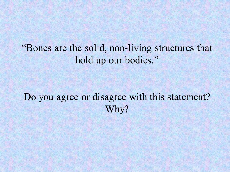 Bones are the solid, non-living structures that hold up our bodies.