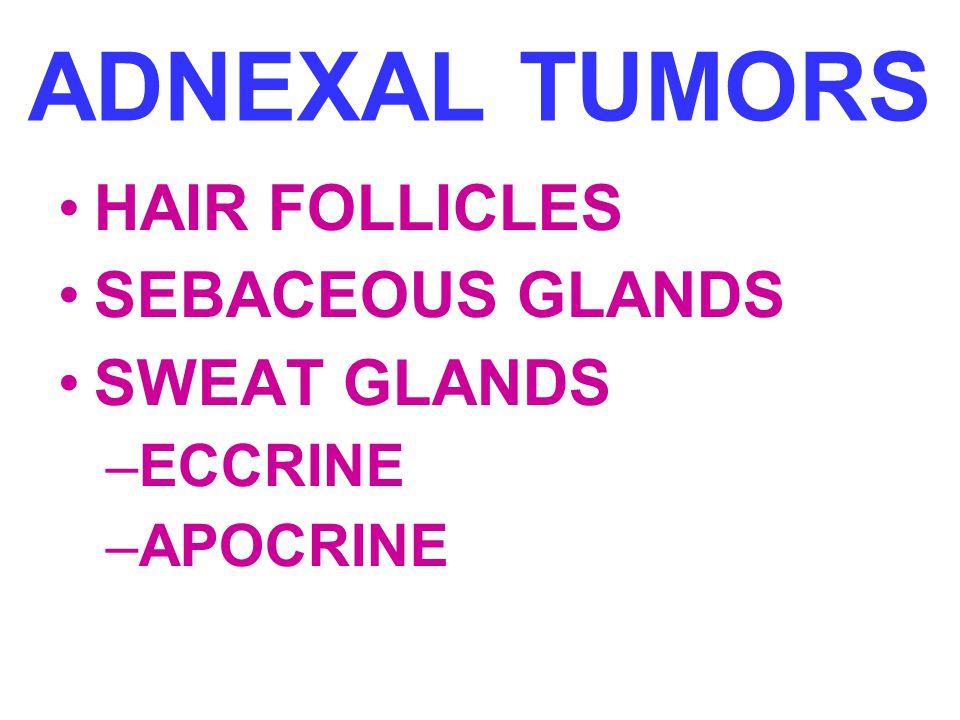 ADNEXAL TUMORS HAIR FOLLICLES SEBACEOUS GLANDS SWEAT GLANDS ECCRINE