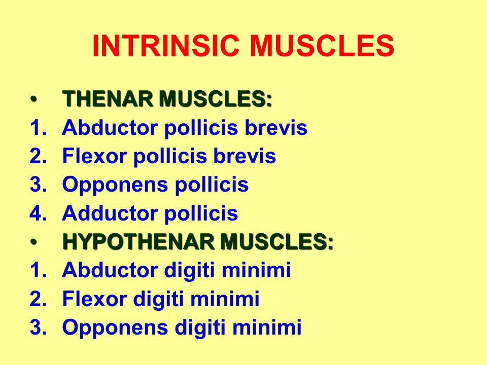 INTRINSIC MUSCLES THENAR MUSCLES: Abductor pollicis brevis